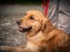 Uno dei cani che ha partecipato al corso del giugno 2014