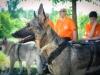 Cani durante una pausa del corso - Giugno 2014