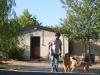 Il momento della passeggiata con i vostri cani