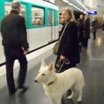 Cane in metropolitana si comporta correttamente