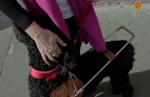 Donatella e Vidoq, preparazione del cane-guida