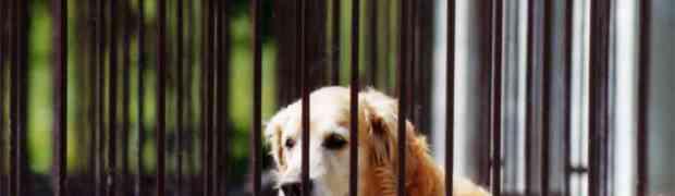 """A.A.A. cercasi media o forza politica che affronti in modo realistico la questione delle """"pensioni per cani"""""""